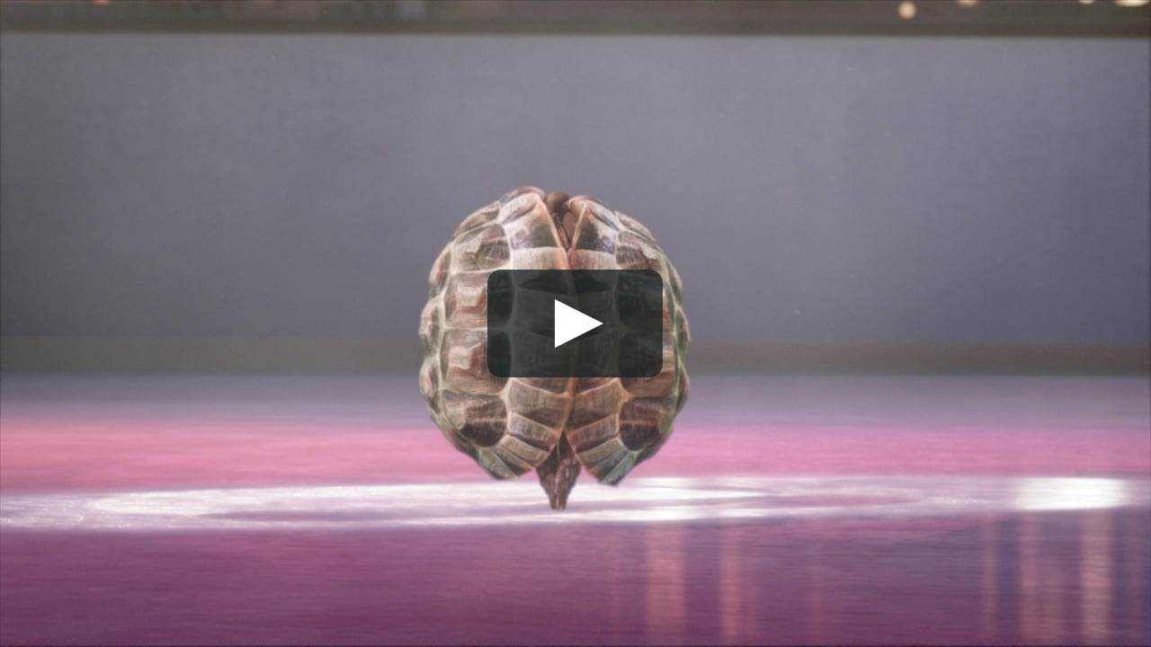 Des tortues patineuses